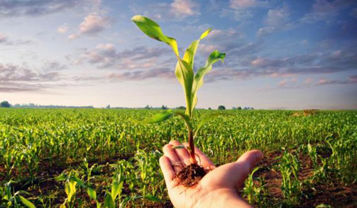 agricoltura artistica